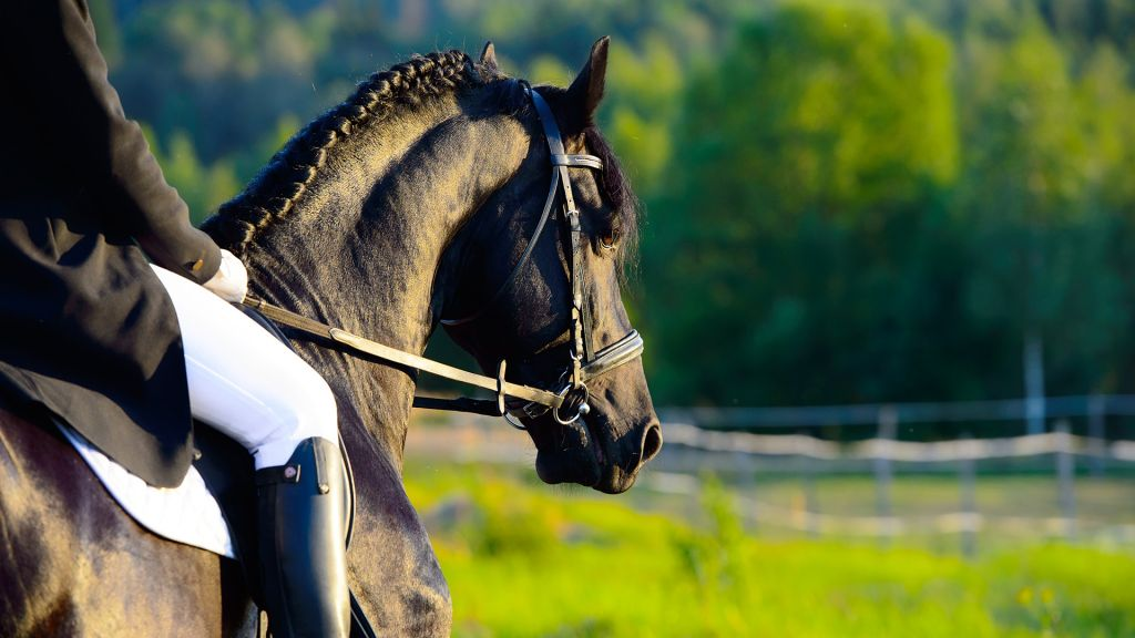 ratsukko auringonlaskussa musta hevonen
