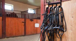Hevostalli ja riimuja roikkumassa seinällä