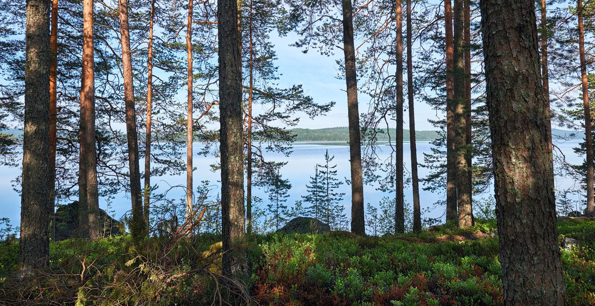 Järvi siintää puiden takaa