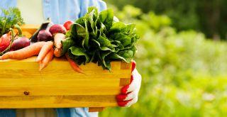vihanneksia puulaatikossa ihmisen käsissä