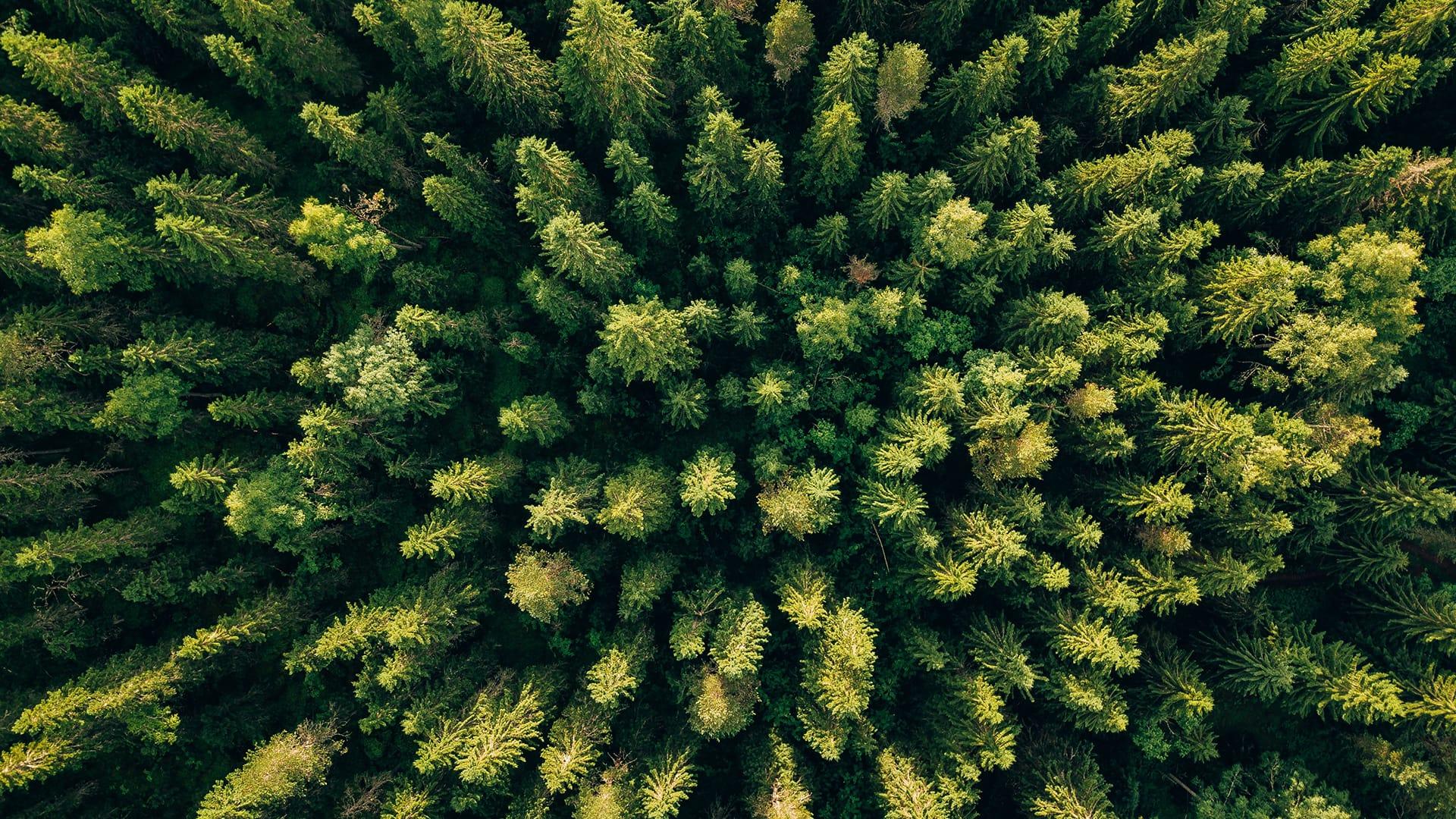 Pohjantähti metsä kuvattuna ilmasta